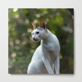 cat pose Metal Print
