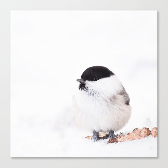 Cute Willow Tit sitting in the snow Canvas Print