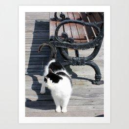 Boardwalk Kitty Art Print
