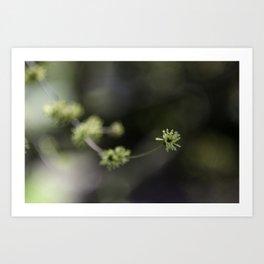 Dainty Nature VIII Art Print