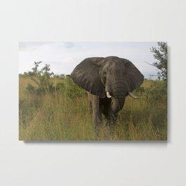 Elephant in the Wild Metal Print