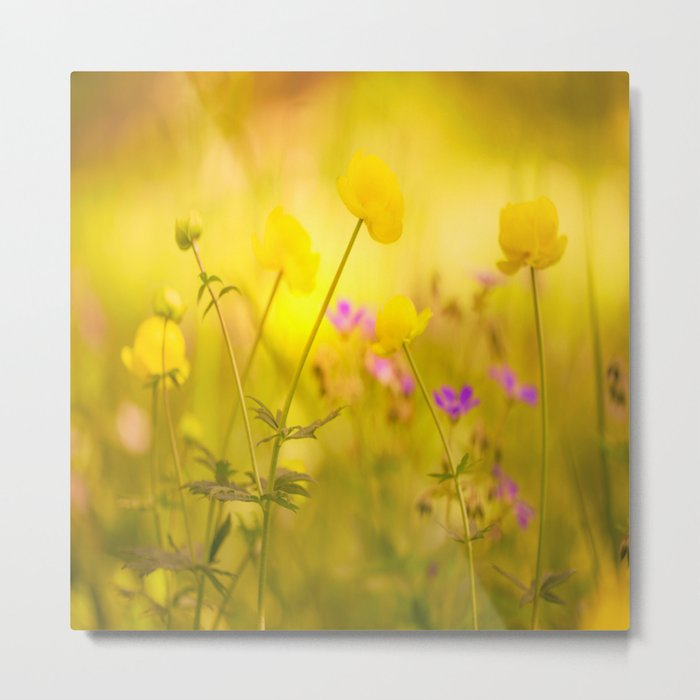 Wild flowers in the golden sunset shades Metal Print