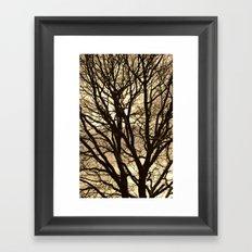 Baum Framed Art Print