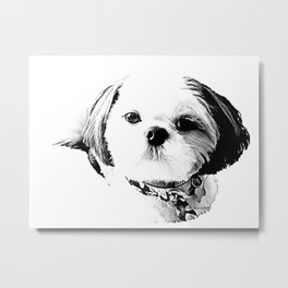 Shih Tzu In Black And White By Annie Zeno Metal Print