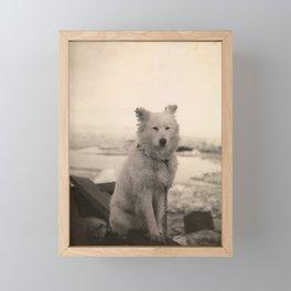Dog on Nansen's Fram Expedition to the Arctic Framed Mini Art Print