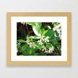 Konferderte Jasmine Framed Art Print