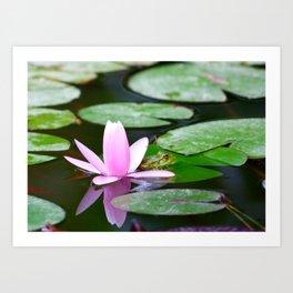 Lotus and frog Art Print