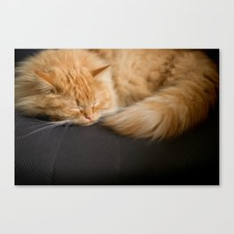 Fluffy Ginger Cat On Black Canvas Print