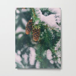 Frosty Pine Cones Evergreen Tree (Color) Metal Print