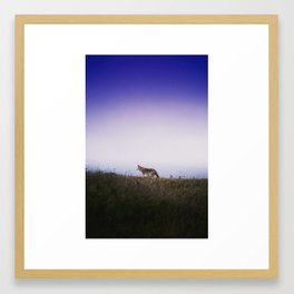 Lone Wolf, Tomales Point, Inverness, United States Framed Art Print