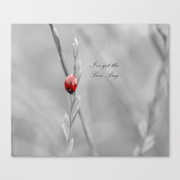 black and white lady bug Canvas Print
