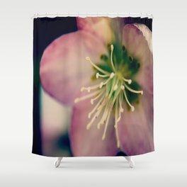 Helleborus  - JUSTART © Shower Curtain