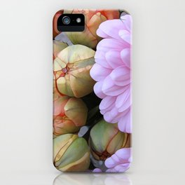 Daisy Loves Tulips iPhone Case