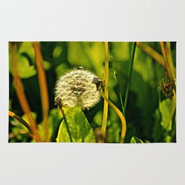 Last Dandelion in Sunlight Rug