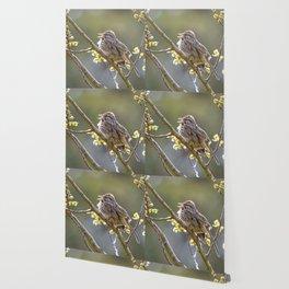 Song Sparrow Wallpaper