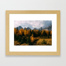 Larch Framed Art Print