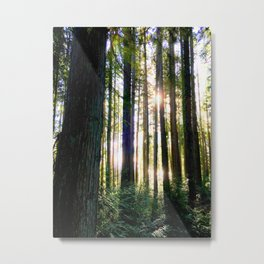 Forest Sunlight Metal Print