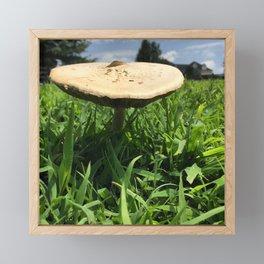 Mushroom in Field Framed Mini Art Print