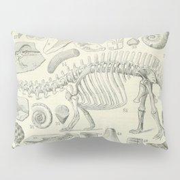 Fossil Chart Pillow Sham