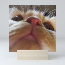 Funny Cute Cat Macro Eyes Mini Art Print