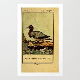 canard siffleur (Fr)6 Art Print