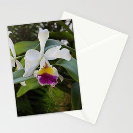 Off to Naples Stationery Cards
