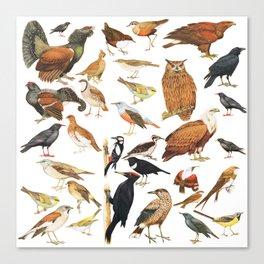bird collection Canvas Print