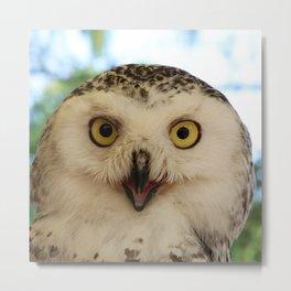 Owl_20180206_by_JAMFoto Metal Print