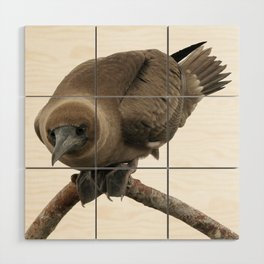 Curious young boobie Wood Wall Art