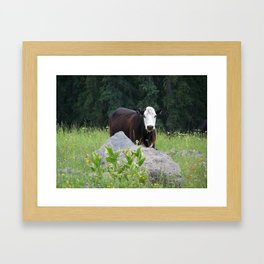 Curious Cow Framed Art Print