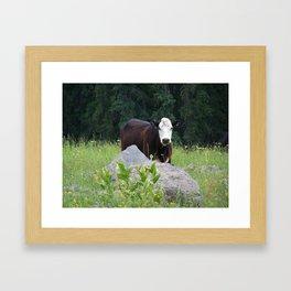 Curious Cow Framed Art Print