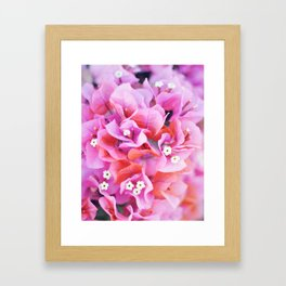 Bougainvillea Framed Art Print