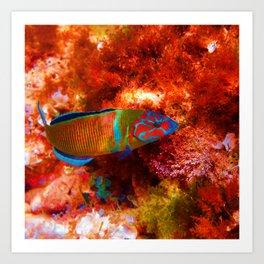 Fish Underwater Art Print