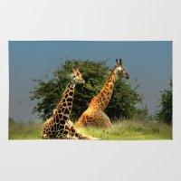 giraffes Area & Throw Rugs featuring Giraffes by Julie Hoddinott
