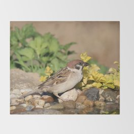 Sparrow at water Throw Blanket