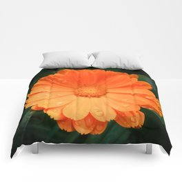 Captivating Calendula Comforters