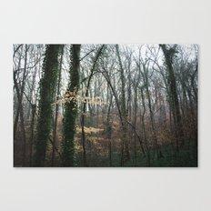 Dahlonega Woods II Canvas Print