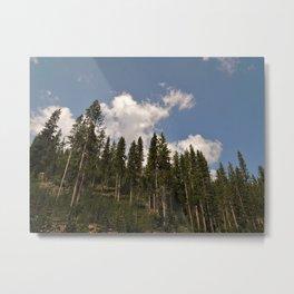 Conifers Metal Print