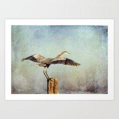 Blue Heron Landing Art Print