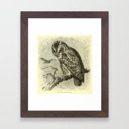 Tawny owl (1893) Framed Art Print