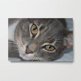 Jumpy the Cat Metal Print