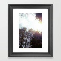 trees* Framed Art Print