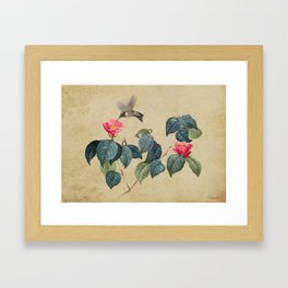 Hummingbird and Japanese Camillea Framed Art Print