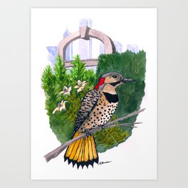 Northern Flicker in Grant Park Rose Garden Art Print