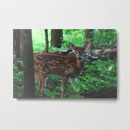 Forest Deer VIII Metal Print