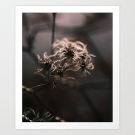 Cold Growth || Clematis Art Print