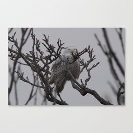 Snowy Owl in Tree Canvas Print