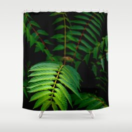 Illuminated Fern Leaf In A Dark Forest Background Shower Curtain