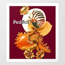 Pacifica 1 - South Pacific Seashells Art Print