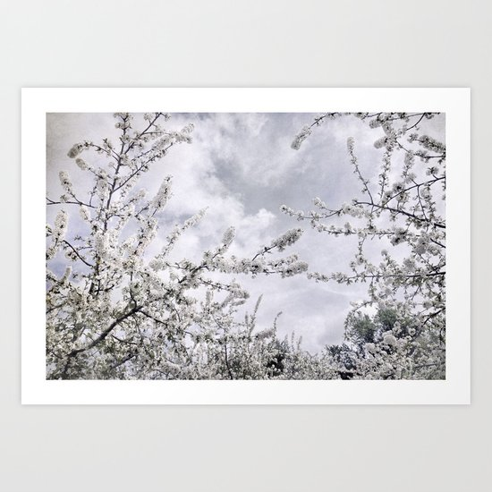 Winter flowers looking at the sun Art Print